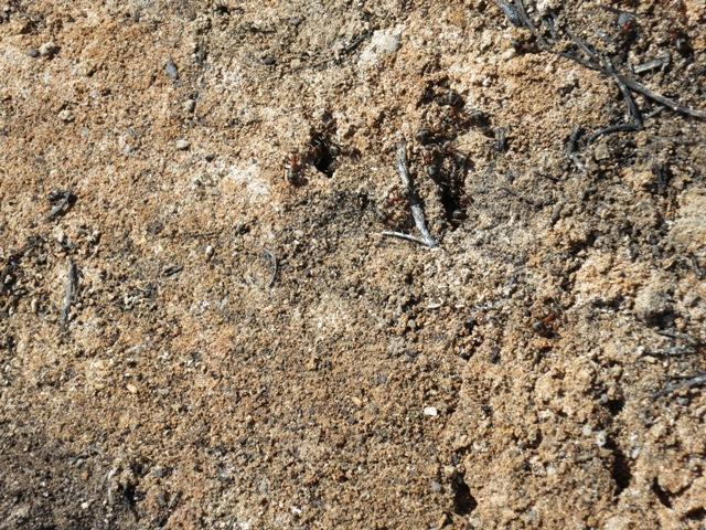 Kaum erkennbar aber die Kameraden Ameisen buckeln schon wieder, es geht aufwärts!