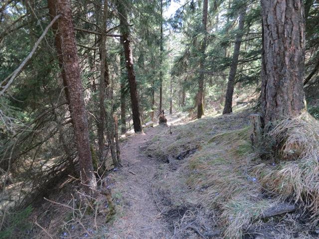 Blick bergab Richtung Rodelhütte, keine Spuren mehr zu sehen