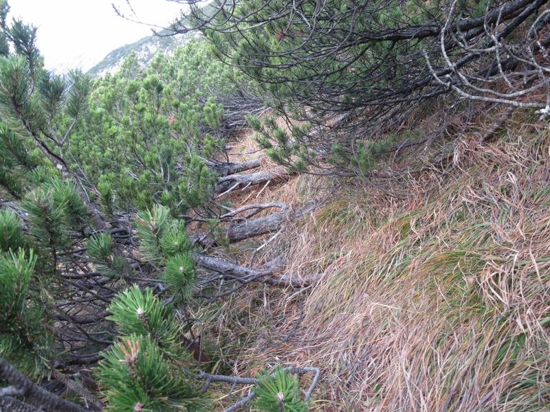 Latschengasse nach dem Ausstieg, am Ende im Unterholz nach oben weiterzukrabbeln