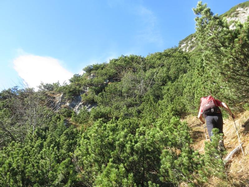 unterer Teil des Anstieges, ca. 10min nach dem Einsteig ab der Bergwiese