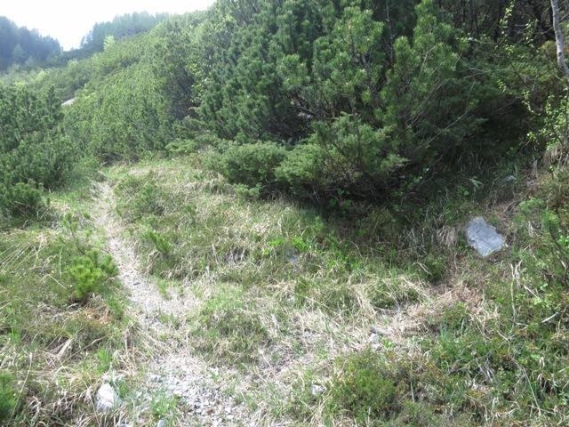 hier geht es rechts ab, flacher Stein und hohe Staude markieren die Stelle
