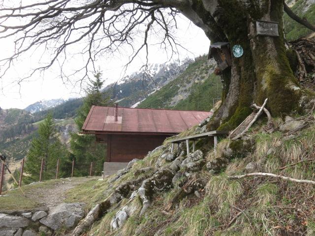 die Eggerhütte mit alter Buche am Rückweg