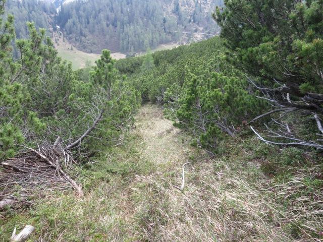 typischer Aufstieg durch den breit angelegten Steig immer auf Wiesenoberfläche