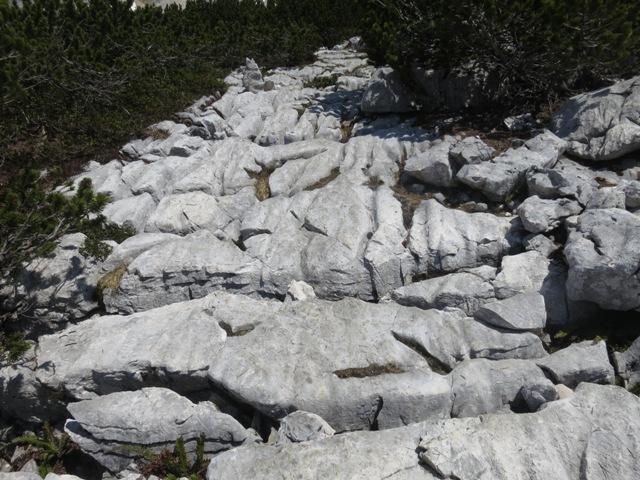 Auswaschungen im Wettersteinkalk, könnte von einer Rifflandschaft stammen