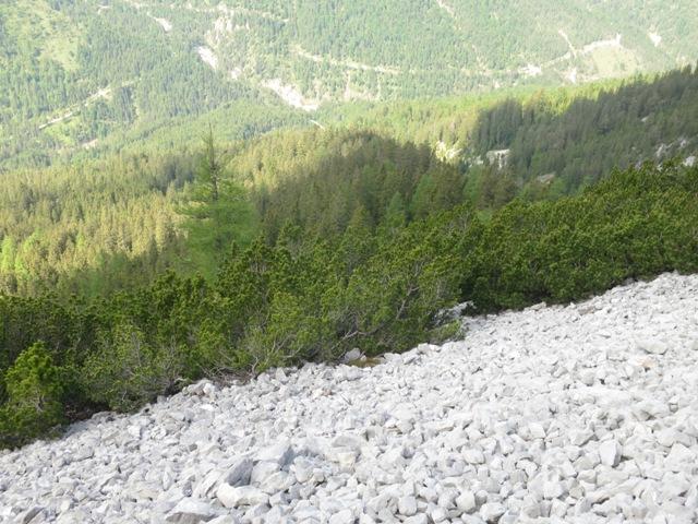 Rückblick auf Wald und Latschengürtel auf ca. 1.720Hm