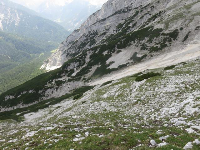 am unteren Ende der Wiesen in den Flecken mit Blick zur Mösl Alm, die Mühlwände brechen vor den Latschen steil ab, die Felsen sind ungangbar