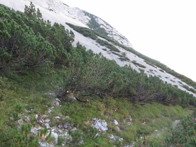 dieser ist es, Höhe 1.665m und man sieht einen Steig abzweigen