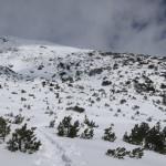 Aufstiegsgelände zwischen den oberen Latschenbeständen