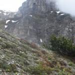 Platenigel unter den Felsen