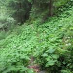Urwald im unteren Teil des Steiges