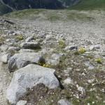 Flora auf 2.650m