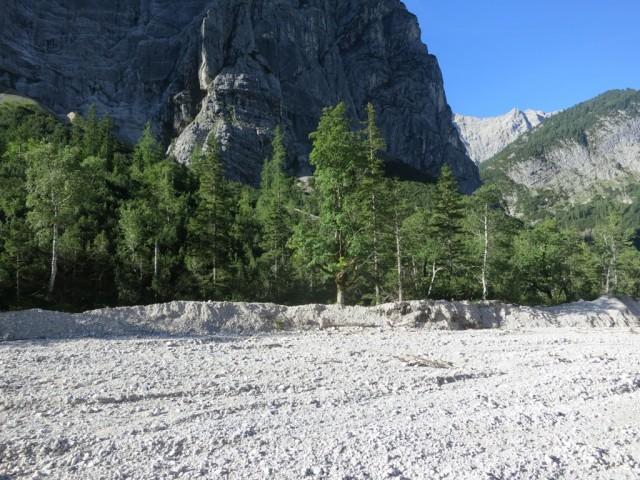 markanter Laubbaum bei Abzweigung zum Moserkarsteig
