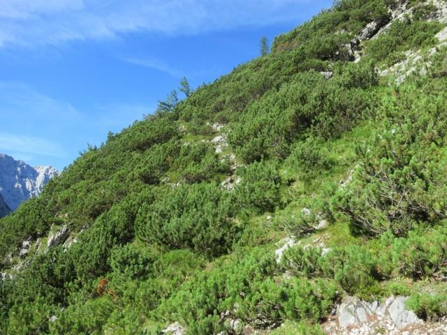 Steiggelände zum Kleinen Heissenkopf