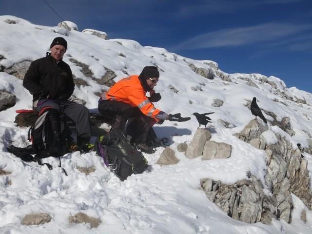 Fütterung kecker Dohlen vertreibt Zeit am Gipfel