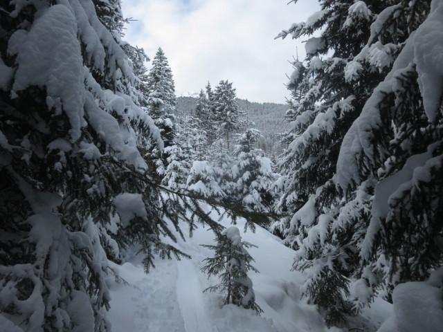 zauberhafte Wanderung durch den Wald