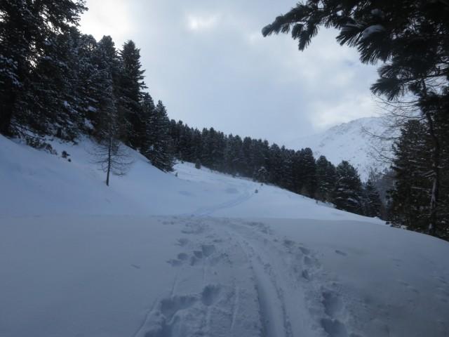freies Gelände erreicht man ca. 80Hm nach der oberen Begrenzung der Studlalm