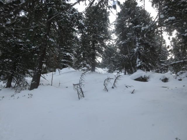 steilere Passagen im Zirbenwald